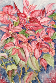 Watercolor flower painting of red poinsettias by manju srivatsa/ watercolor artist at jaipur, india/ at StudioM/watercolor flowers/ textured background