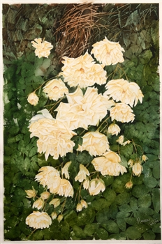 Watercolor flower painting of white cluster roses on a green bush by manju srivatsa/ watercolor artist at jaipur, india/ at StudioM/watercolor flowers/ textured background