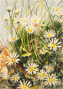 Watercolor flower painting of daisies by Manju Srivatsa an emerging watercolor artist and flower painter at StudioM, at Jaipur, India.