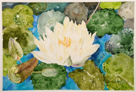 Watercolor flower painting of the lotus flower by manju srivatsa/ watercolor artist at jaipur, india/ at StudioM/watercolor flowers/ textured background